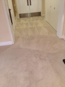 Carpet cleaning service in Orange County